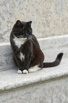 Um gato preto fofo sentado em um pedestal de granito em um dia de verão