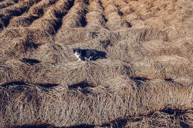 Um gato repousa sobre ervas secas.