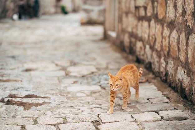 Um gato ruivo caminhando por uma estrada de pedra