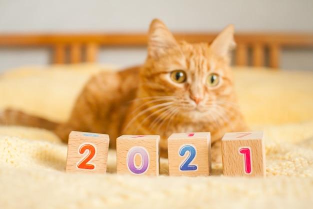 Um gato ruivo gordo e os números 2021 de cubos infantis em um cobertor de tricô amarelo. ano novo