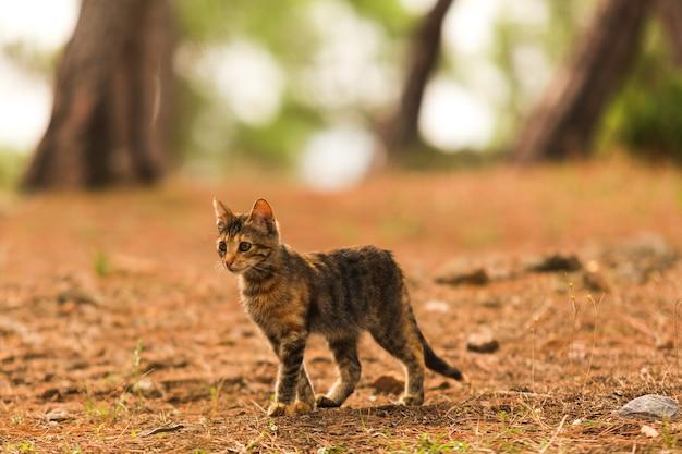 Um gato sem-teto em busca de comida na floresta animal selvagem caminhando para a floresta