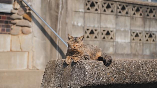 Um gato sentado no muro de pedra de concreto