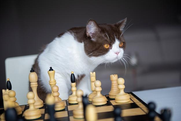 Um gato sério está jogando xadrez
