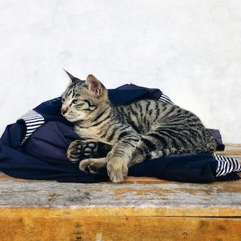 Um gato sonolento
