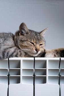 Um gato tigre relaxando em um radiador quente
