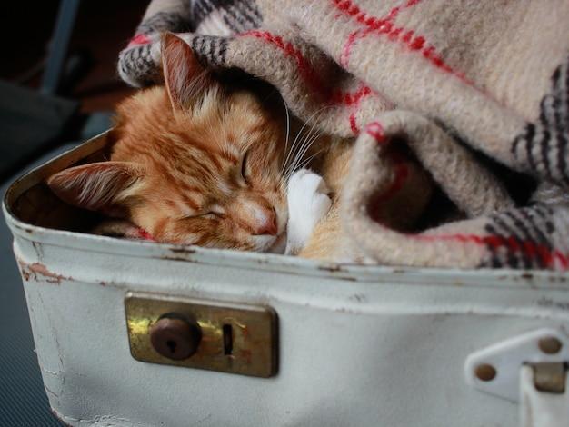 Um gato vermelho deitado em uma mala branca