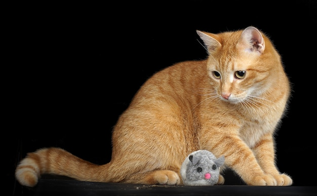 Um gato vermelho está sentado ao lado de um rato - um símbolo do ano 2020, um rato de brinquedo.