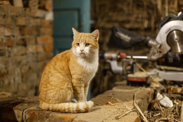 Um gato vermelho senta-se e toma sol em um forno de tijolos. vida do animal de estimação na vila