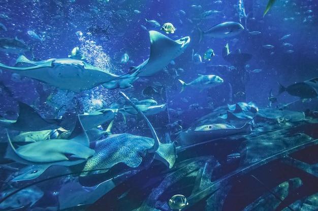 Um grande aquário com tubarões e arraias.
