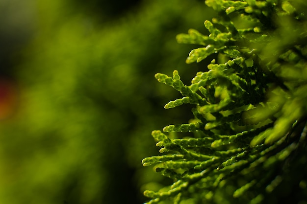 Um grande arbusto verde cresce no jardim, imagine com foco em um pequeno galho