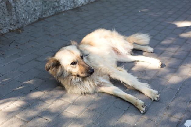Um grande cão vadio com uma pelagem leve e longa jaz tristemente nos ladrilhos da calçada. Foto Premium