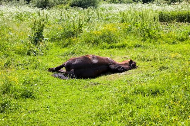 Um grande cavalo preto