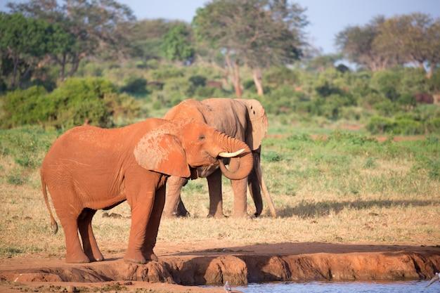 Um grande elefante vermelho no parque nacional tsavo east