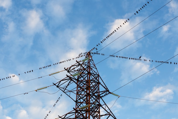 Um grande grupo de aves sentado nos fios da linha de energia