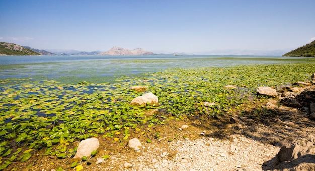 Um grande lago em uma área montanhosa rochosa, nenúfares flutuam no lago, plantas crescem na costa