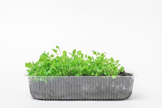 Um grande número de plantas jovens em um recipiente de plástico em uma superfície branca