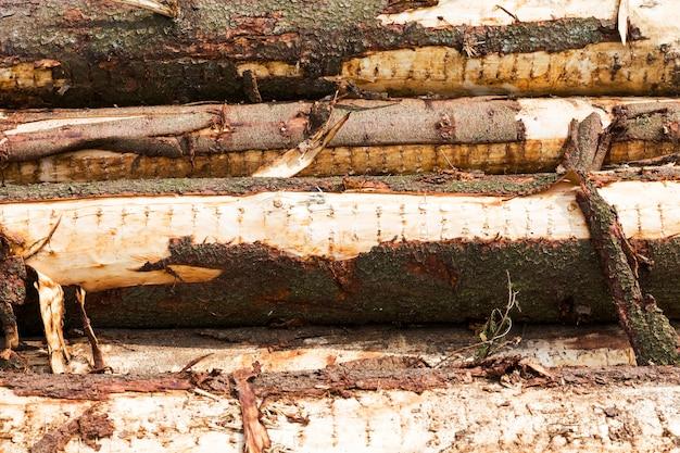 Um grande número de troncos de árvores com casca danificada durante a extração de madeira, close-up na floresta