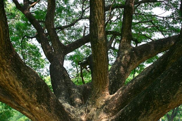 Um grande tronco de árvore velha com ramos
