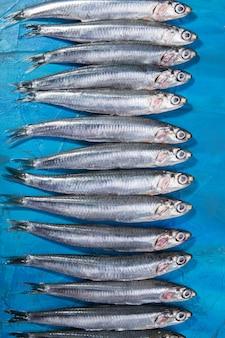 Um grupo de anchovas espalhadas. mar jónico, itália, região de puglia