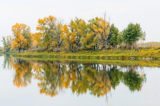 Um grupo de árvores no outono na margem do rio refletiu o reflexo das árvores