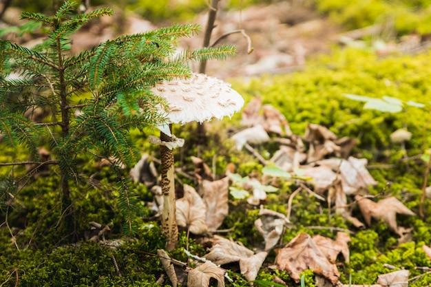 Um grupo de cogumelos na floresta