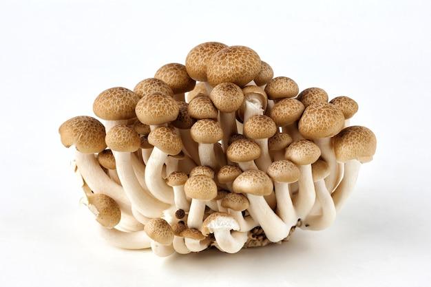 Um grupo de cogumelos shimeji em um fundo branco.