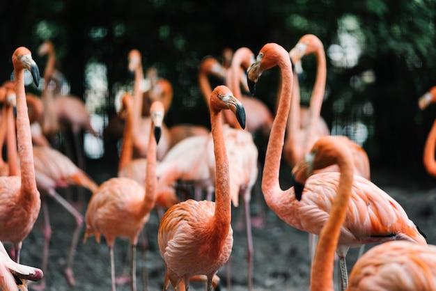 Um grupo de flamingo reunido em torno