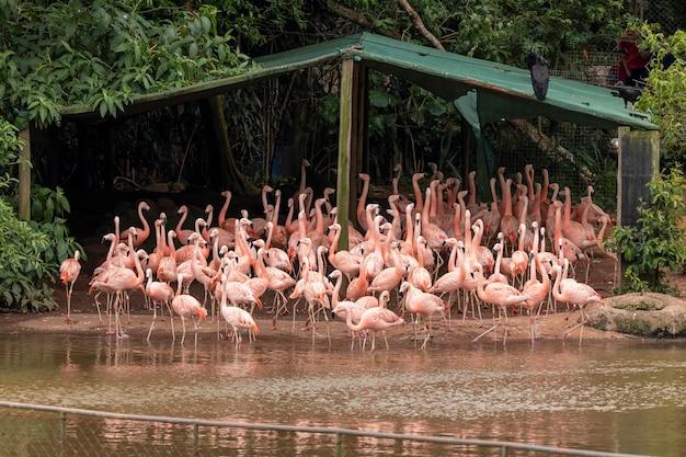 Um grupo de flamingos em pé em um terreno