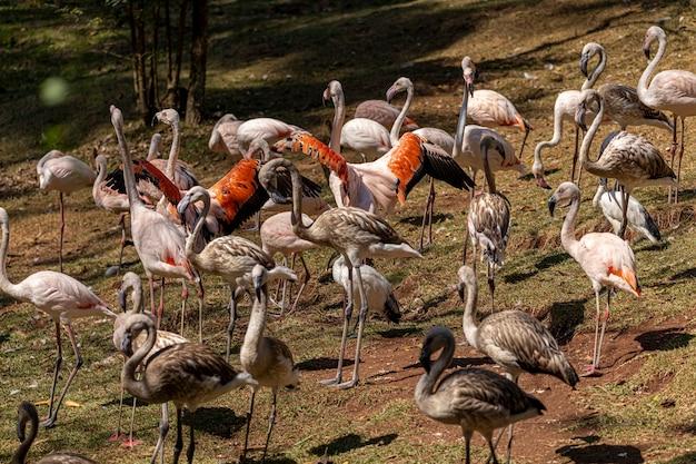Um grupo de flamingos em pé em uma grama.