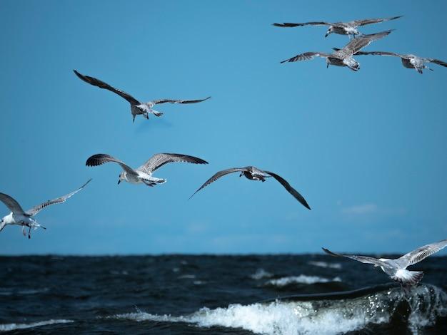 Um grupo de gaivotas caça peixes nas ondas do mar em um dia ensolarado