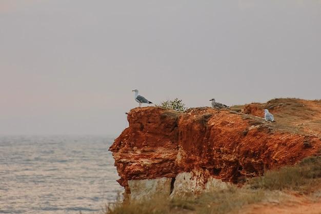 Um grupo de gaivotas selvagens na rocha sobre o oceano ou mar