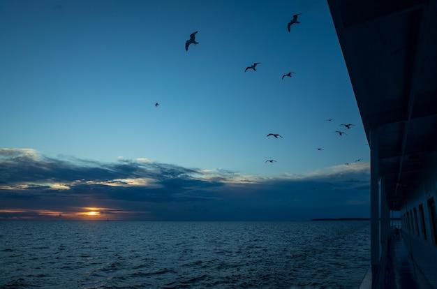 Um grupo de gaivotas voa acima da superfície do mar