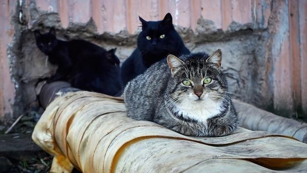 Um grupo de gatos vadios está se aquecendo no aquecedor da rua