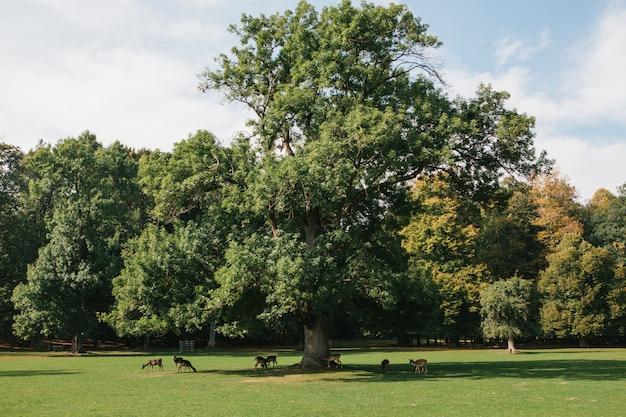 Um grupo de jovens veados percorre um prado ensolarado verde quente em uma floresta ao lado das árvores