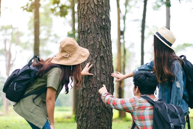 Um grupo de viajantes caminhando e explorando um belo pinheiro na floresta