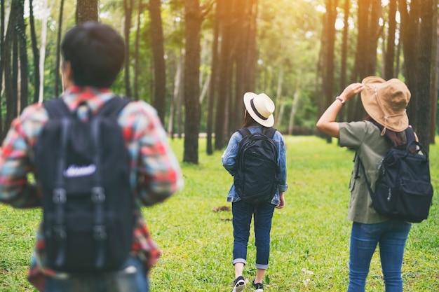 Um grupo de viajantes caminhando e olhando para um belo pinhal