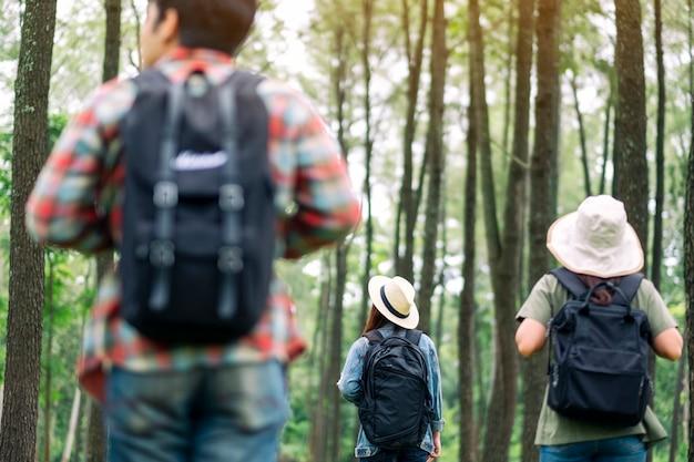 Um grupo de viajantes caminhando em uma bela floresta de pinheiros