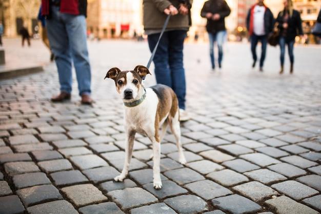Um homem anda com um cachorro no centro da cidade. um cão solitário com lindos olhos olha para os transeuntes em uma praça na alemanha