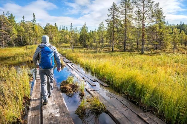 Um homem caminha ao longo de uma estrada feita de pranchas de madeira através de um pântano na ilha anzer (ilhas solovetsky) sob os raios do sol de outono