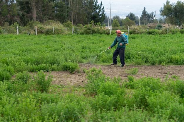 Um homem caminhando com um pacote de fumigação entre a alfafa.