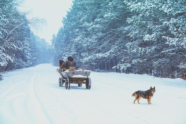 Um homem cavalga em uma carroça puxada por cavalos em uma estrada com neve no inverno