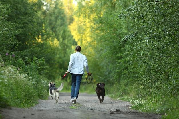Um homem com dois cães andando em um campo ensolarado