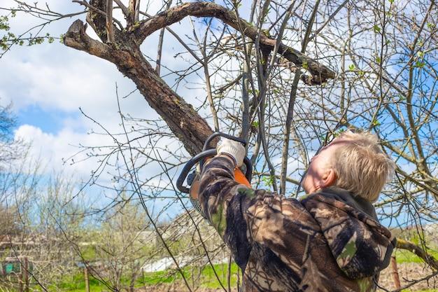 Um homem com uma motosserra poda galhos secos de velhas árvores na primavera. jardinagem e cuidados com a árvore.