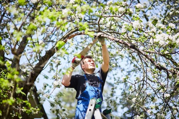 Um homem com uma serra corta um ramo de uma macieira florescendo no jardim.