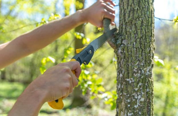 Um homem corta um galho seco com uma serra manual em uma árvore na floresta