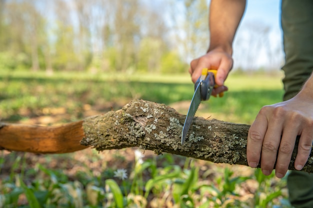 Um homem corta um galho seco com uma serra manual na floresta