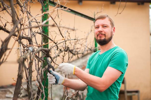 Um homem corta uvas na primavera. um homem cuidando de um close de vinhedo e copie o espaço.
