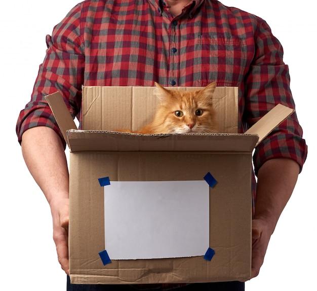 Um homem de camisa vermelha segura uma caixa de papelão marrom aberta, um gato vermelho adulto senta-se dentro e olha para a frente