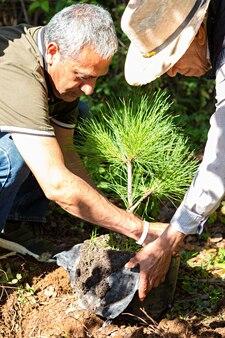 Um homem e um velho abrindo a sacola de uma árvore para plantá-la em um dia ensolarado no meio da floresta