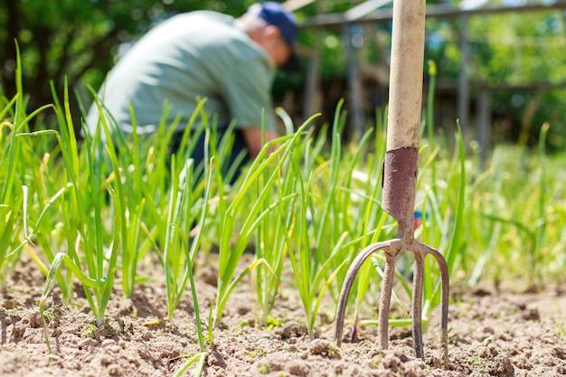 Um homem está arrancando ervas daninhas do canteiro homem no jardim